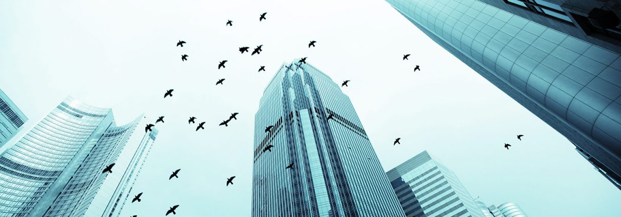 Birds in flight and office buildings