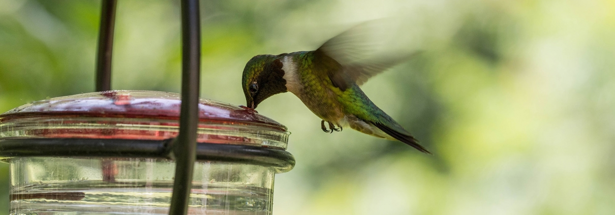Hummingbird at bird feeder