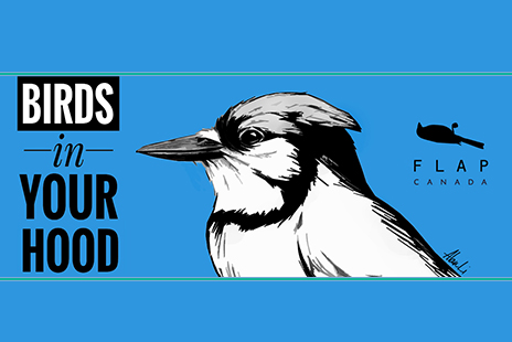 Bird with Tagline - Birds in Your Hood