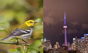 bird and Toronto skyline at night